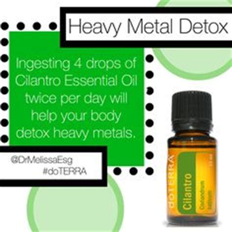 cilantro herb assists in heavy metal detoxification 25 ways to diffuse essential oils without a diffuser