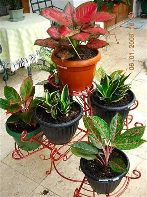 jual rak standing pot besi tanaman hias