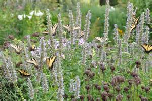 creating a butterfly garden learning initiative