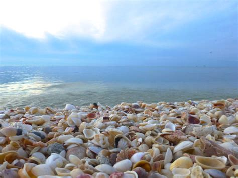 best beaches for seashells for the day i shelling