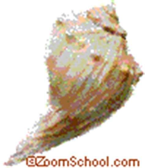Knobbed Whelk Facts by Facts About