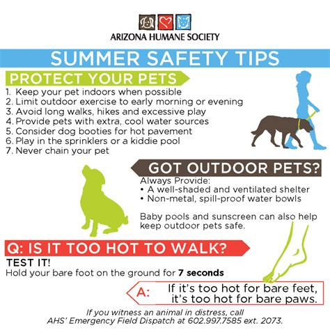 9 Tips On Keeping Your Outside Pet Safe From The Cold summer pet safety arizona humane society