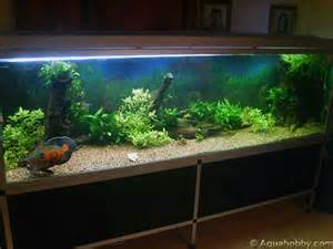 Gallery images and information: Oscar Fish Tank