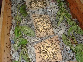 Semprotan Untuk Kandang Ayam gubug sawah budidaya ternak jangkrik