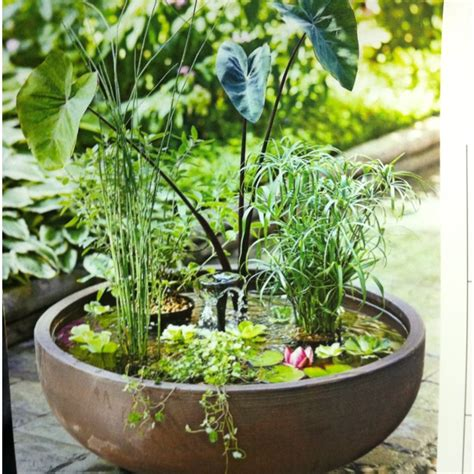 Water Container Garden Ideas Container Water Garden Ideas Photograph Container Water Ga