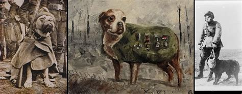 Sgt Stubby Story How A Stray Became A War
