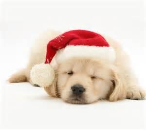 Cute christmas puppies new calendar template site