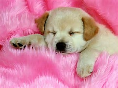 Cute Puppies Sleeping Dogs