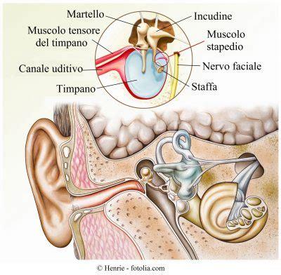 dolore interno orecchio otosclerosi all orecchio sintomi e cause cocleare