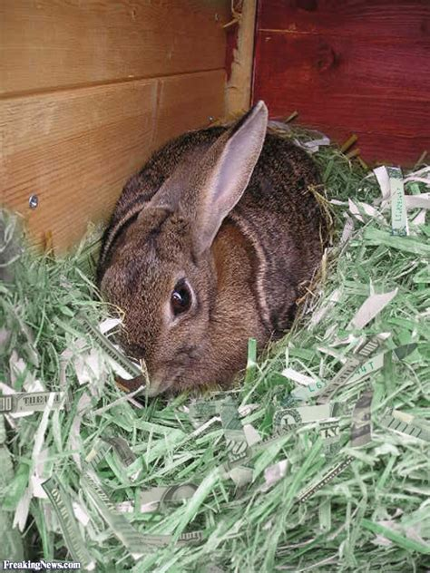 bunny bedding bunny bedding pictures freaking news
