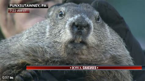 groundhog day 2016 2016 groundhog day see if punxsutawney phil saw