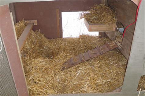 chicken bedding winterize chicken coop cold weather chicken care kittycooks