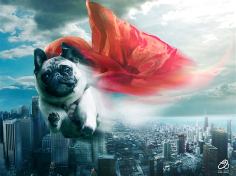 when pugs fly fly pug fly by erichenrique on deviantart