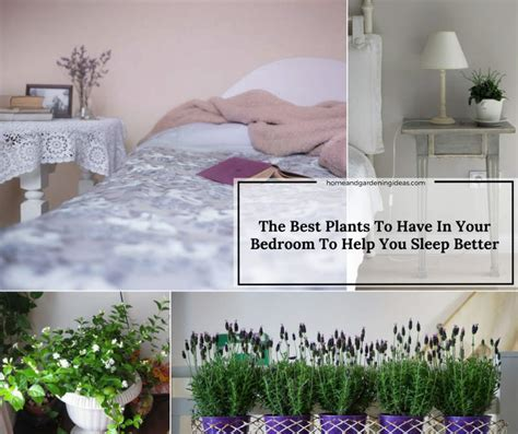 best plant to have in bedroom the best plants to have in your bedroom to help you sleep