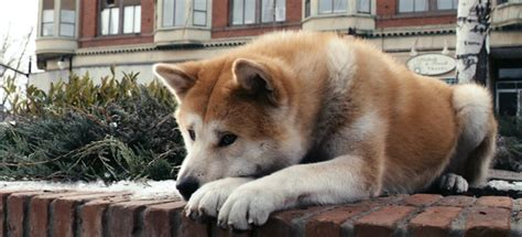 """Hachiko"" – Symbol of Loyalty 