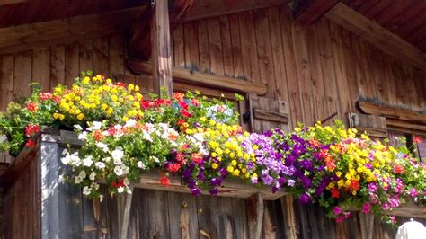 immagini di balconi fioriti balconi fioriti di montagna ambra garden designer