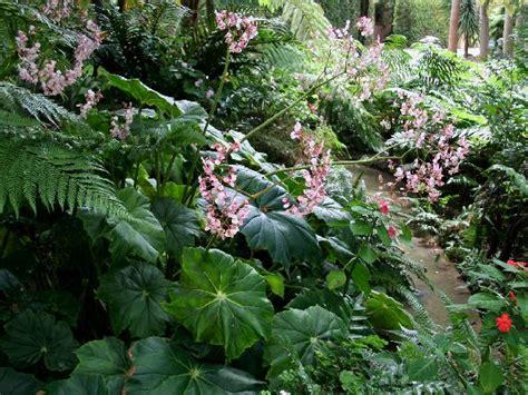 imagenes de jardines de sombra verdeesvida jardines de sombra