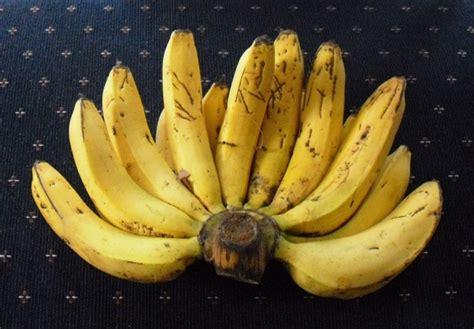 1 Sisir Pisang Ambon penjelasan lengkap 3 jenis 16 manfaat pisang ambon