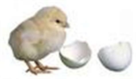 Mesin Penetas Telur Ayam Surabaya jual mesin penetas telur manual 500 telur em 500 di