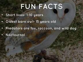 barn owls facts galapagos barn owls by chopra