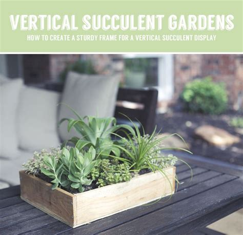 How To Make A Vertical Succulent Garden 1000 Ideas About Vertical Succulent Gardens On