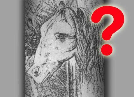 test illusioni ottiche illusioni ottiche chi riconosce l animale nascosto nella