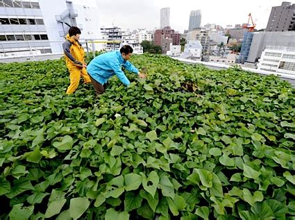 rooftop vegetable gardening my vegetable garden roof top vegetable gardening