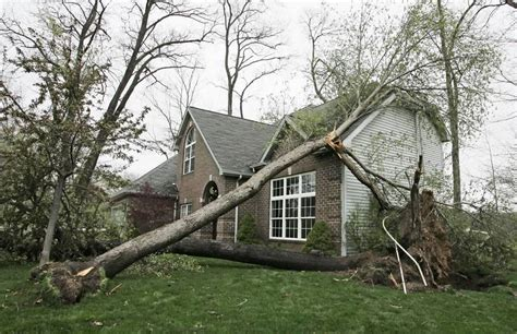 home insurance trees close to house what to do who to call when a tree falls
