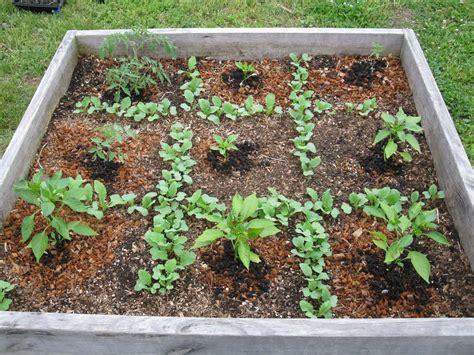 187 square foot gardening herbs