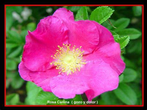 imagenes flores silvestres sus nombres las flores y el significado de sus nombres iv parte y final