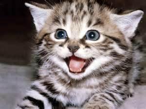 <strong>kitten</strong>.jpeg