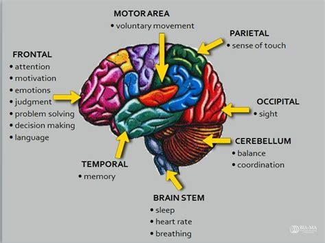 google images brain as 25 melhores ideias de google brain no pinterest dylan