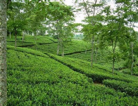 natural beauty  bangladesh scenery  bangladeshi village