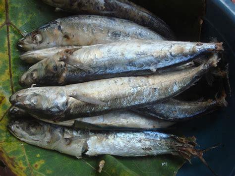 Pelung Anak Ikan Paus Jumbo ikan arsip satu jam