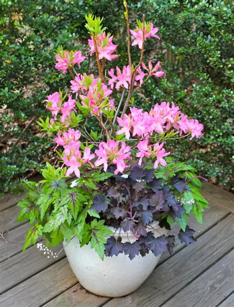 container gardens for shade plant shade container garden