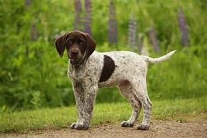 Image http petcollectionworld com wp content uploads 2012 12 puppy