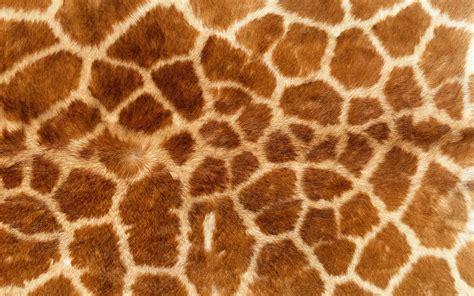 printable animal skin patterns fmp design context bacardi animal skin