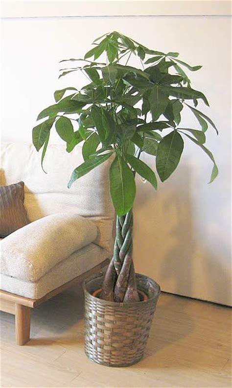 piante da appartamento come curarle le piante da appartamento pi 249 ecco come curarle