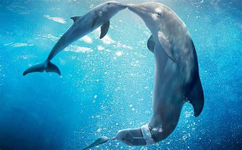 imagenes reales de winter el delfin trailer en espa 241 ol de winter el delf 237 n 2 la aventura