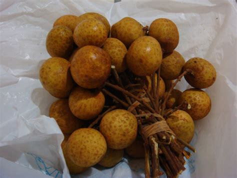 fruit similar to lychee indonesia fruit installement 6 lengkeng kelengkeng longan
