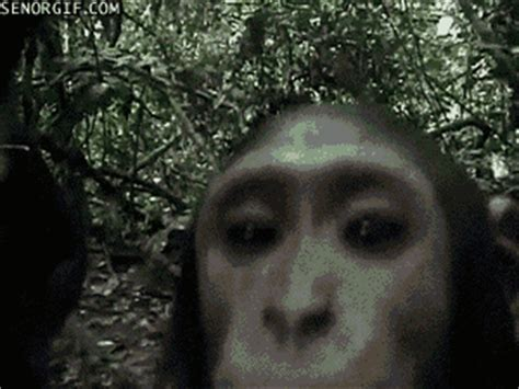 monkey camera gif by cheezburger find & share on giphy