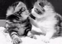 convertir varias imagenes jpg a gif pin gatos enamorados gif dibujos emos imagenes mil dibujo