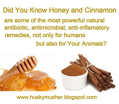dogs and cinnamon katerina s journal healing your naturally with
