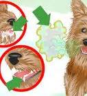 how to keep yorkies clean how to brush a s teeth with pictures wikihow