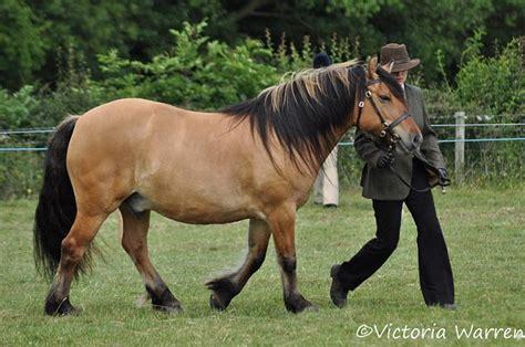 highlander on horse jaqui wilson flickr 17 best images about highland ponies on pinterest horses