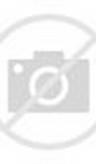 Koleksi Gambar Ayam Aduan