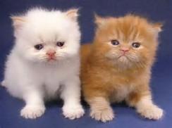 ... terus bagaimana ya cara merawat anak kucing sebenarnya anak kucing