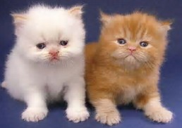 nge_est comunity: Tanda-tanda Kucing Sakit