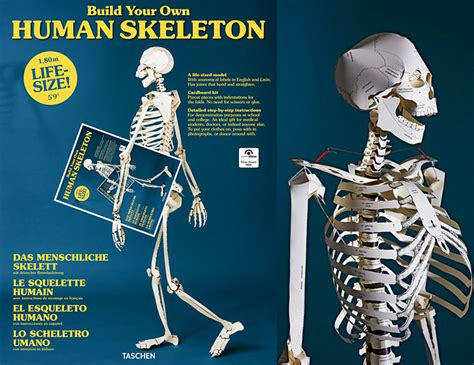 How To Make A Human Skeleton Out Of Paper - diy paper anatomy kits human skeleton book