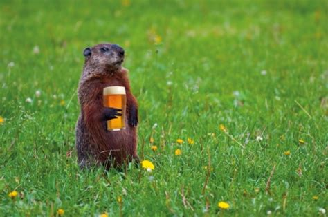 groundhog day drink brewhog determines 6 more weeks of winter beers for 2017